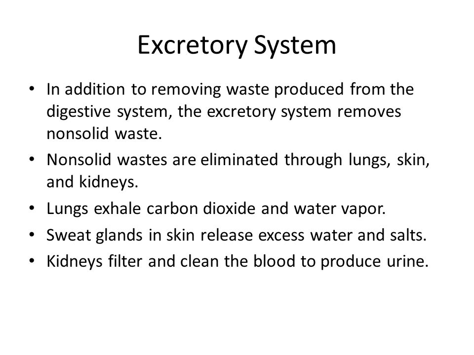 Excretory System In addition to removing waste produced from the digestive system, the excretory system removes nonsolid waste.