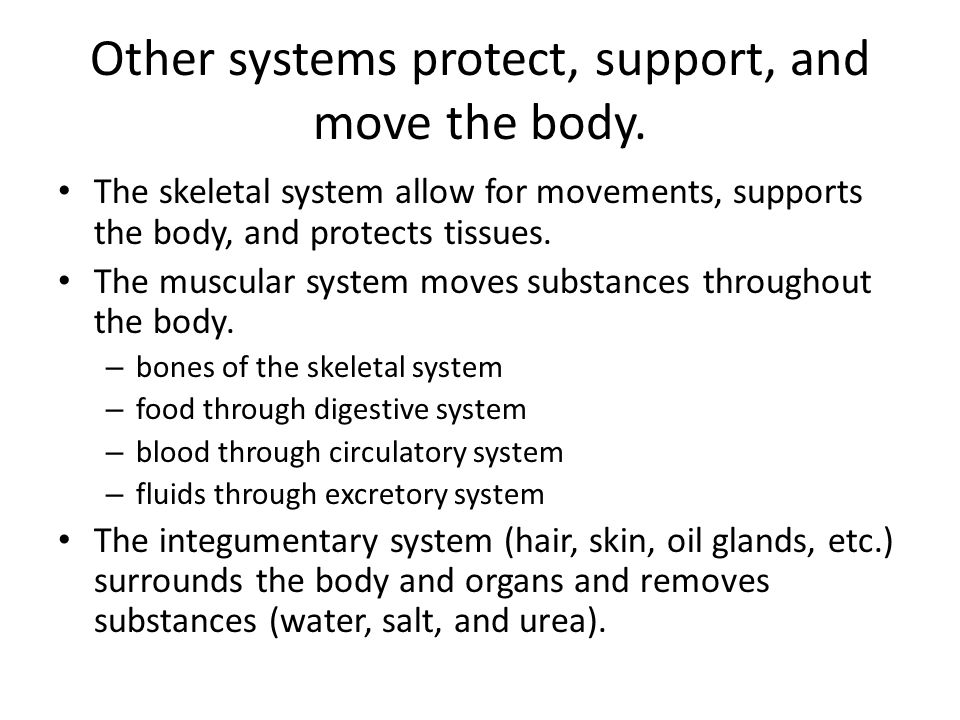 Other systems protect, support, and move the body.
