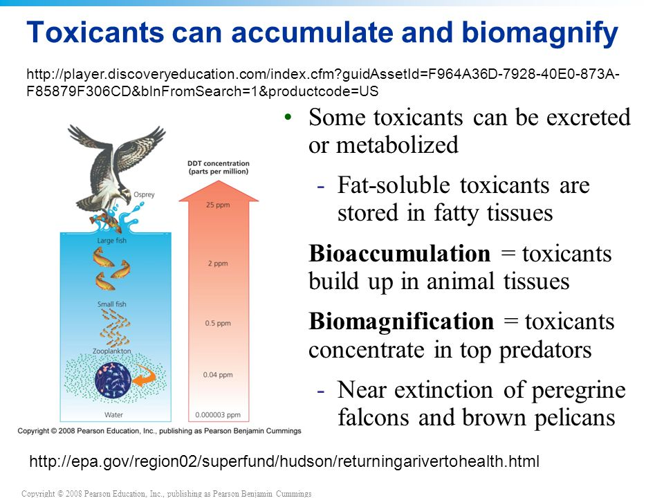Toxicants can accumulate and biomagnify
