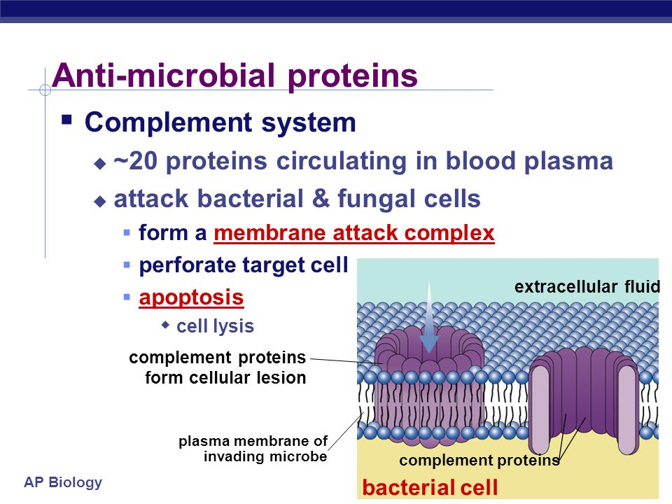 Anti-microbial proteins