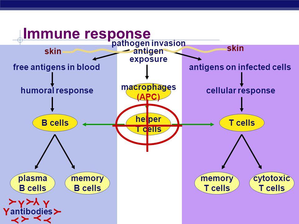 pathogen invasion antigen exposure antigens on infected cells