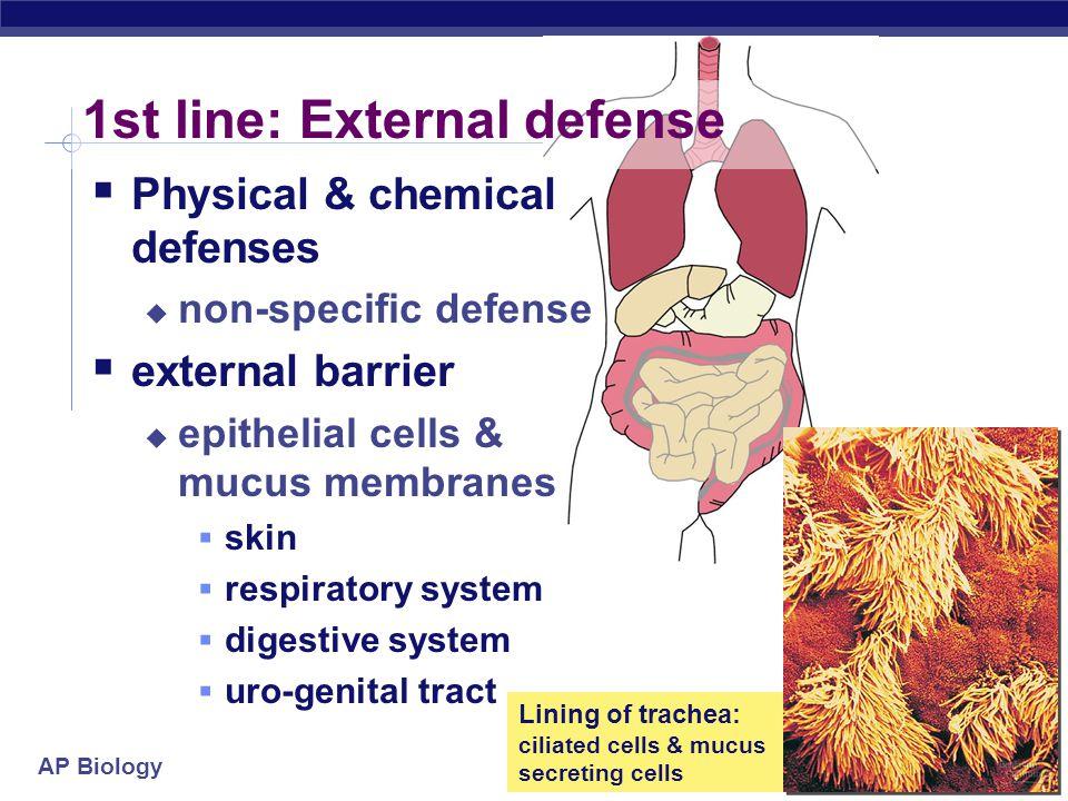1st line: External defense