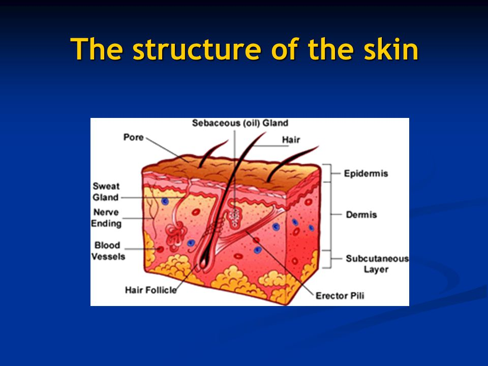 Uv Radiation Ozone Cfc Skin Cancer Ppt Video Online