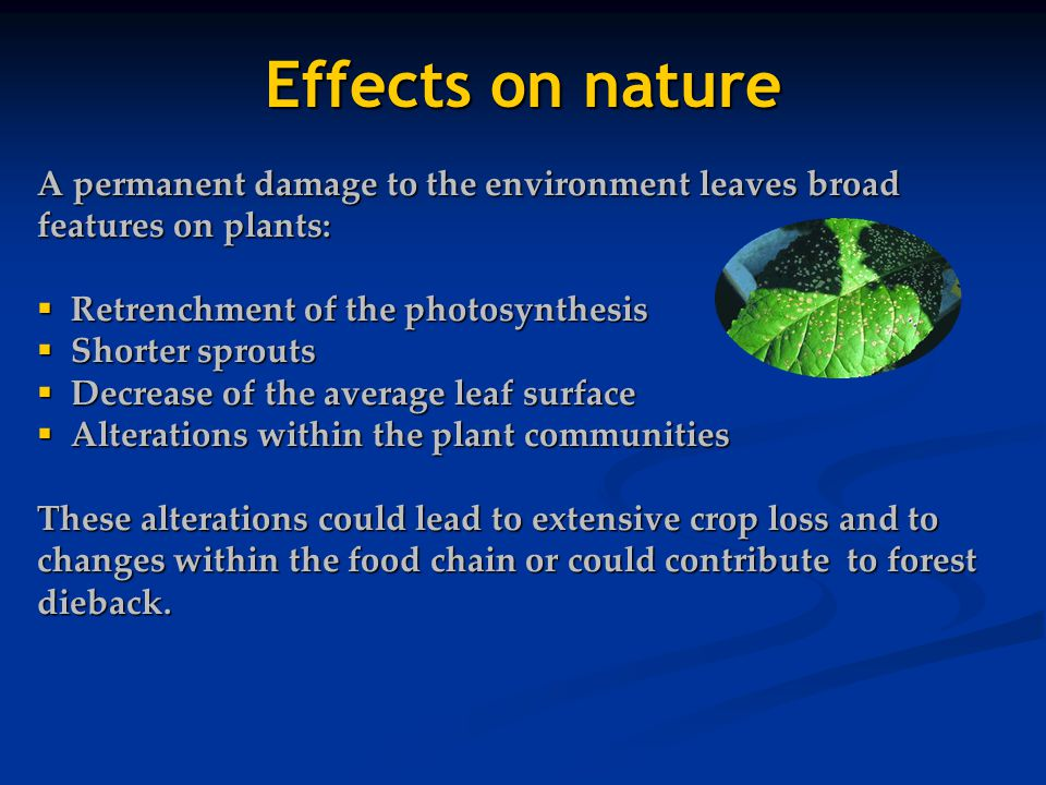Effects on nature A permanent damage to the environment leaves broad features on plants: Retrenchment of the photosynthesis.