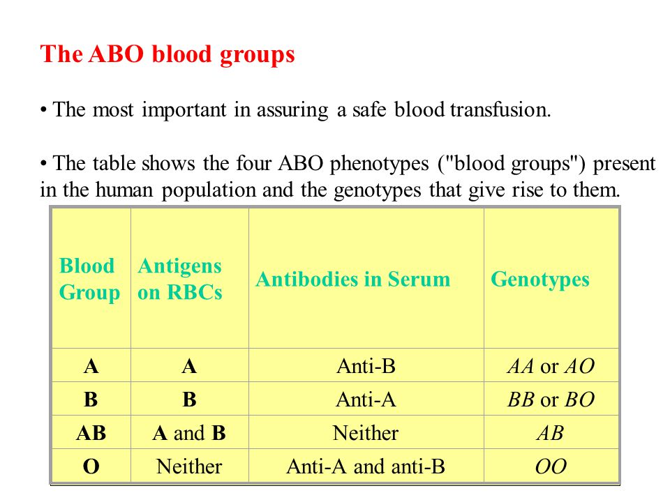 The ABO blood groups The most important in assuring a safe blood transfusion.