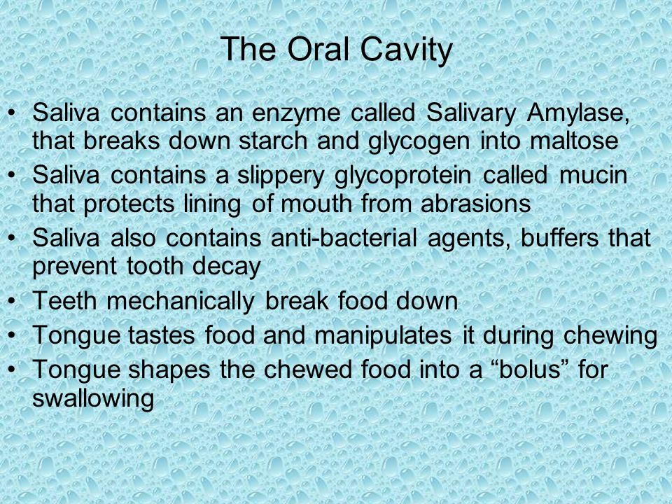 The Oral Cavity Saliva contains an enzyme called Salivary Amylase, that breaks down starch and glycogen into maltose.