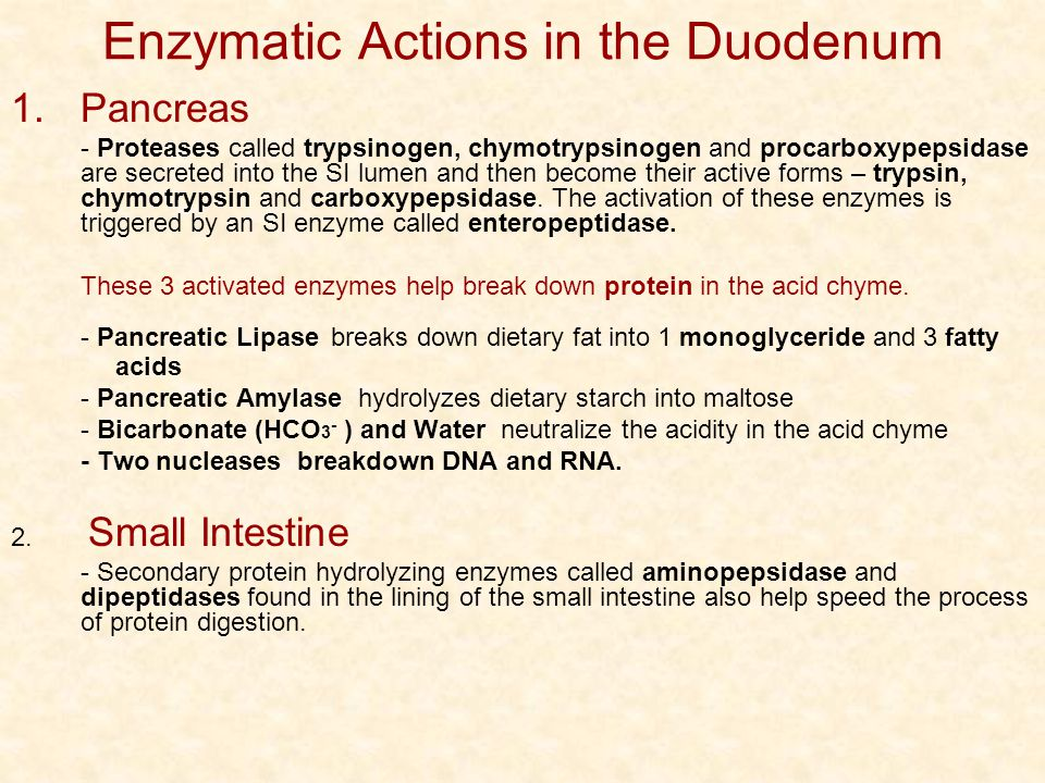 Enzymatic Actions in the Duodenum