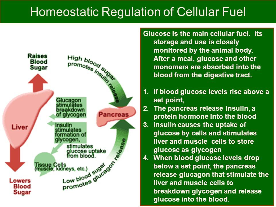 Homeostatic Regulation of Cellular Fuel