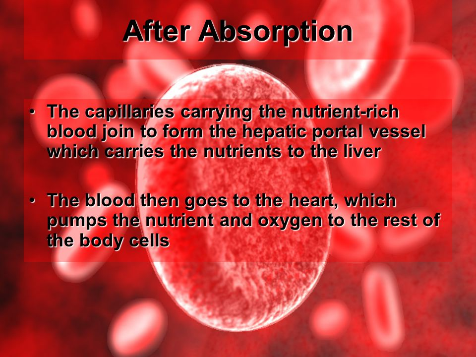 After Absorption The capillaries carrying the nutrient-rich blood join to form the hepatic portal vessel which carries the nutrients to the liver.