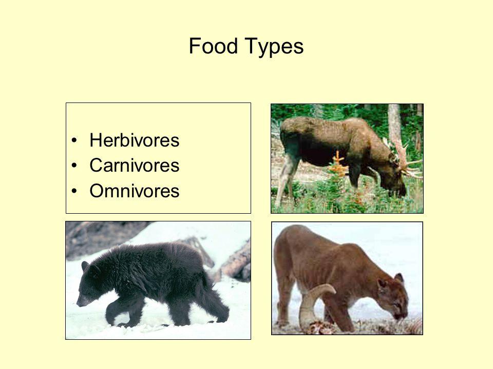 Food Types Herbivores Carnivores Omnivores