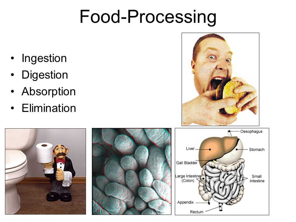 Food-Processing Ingestion Digestion Absorption Elimination