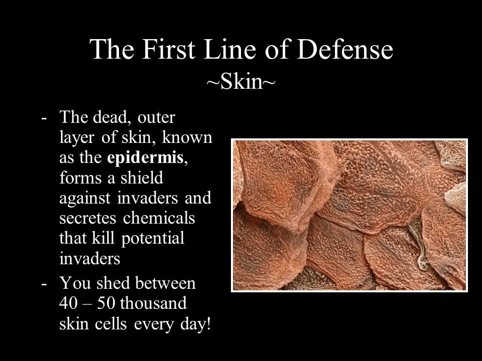 The First Line of Defense ~Skin~