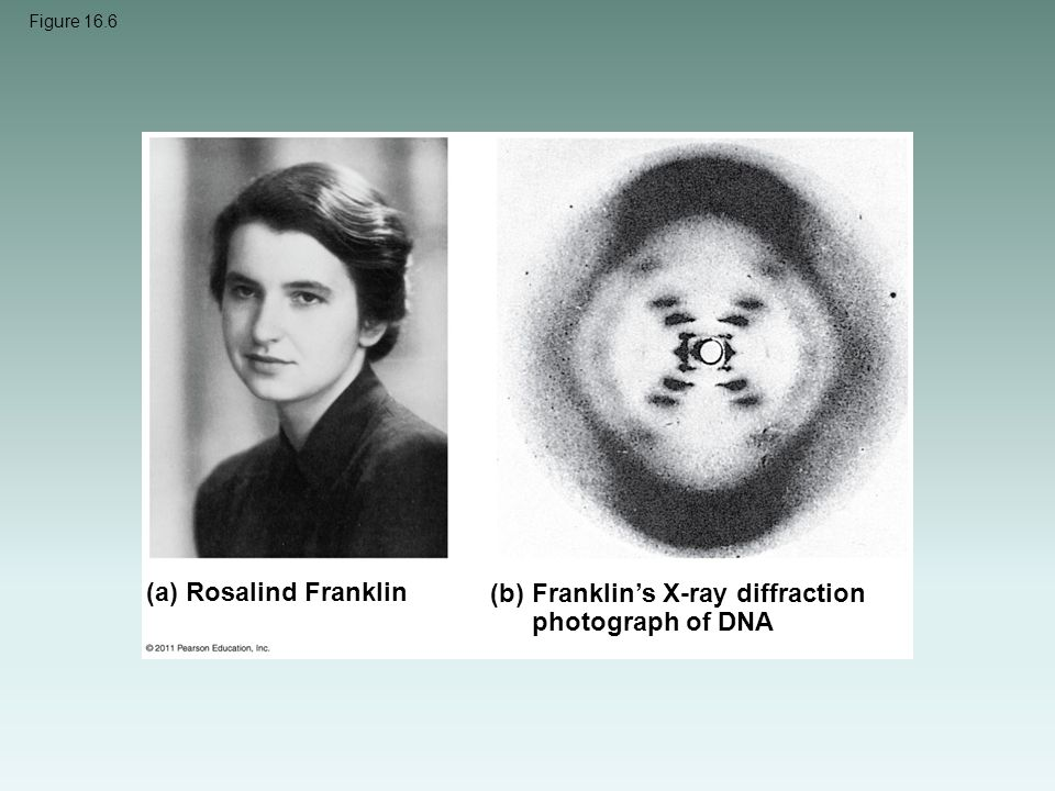 Franklin's X-ray diffraction photograph of DNA