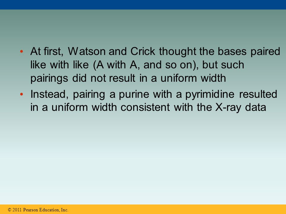 At first, Watson and Crick thought the bases paired like with like (A with A, and so on), but such pairings did not result in a uniform width