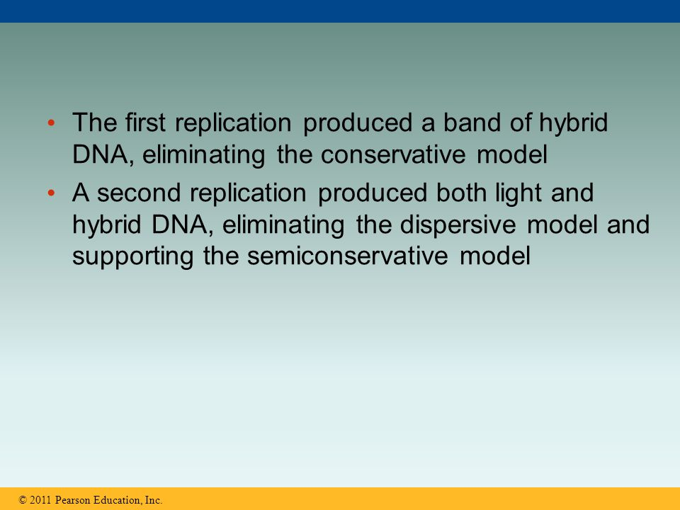 The first replication produced a band of hybrid DNA, eliminating the conservative model