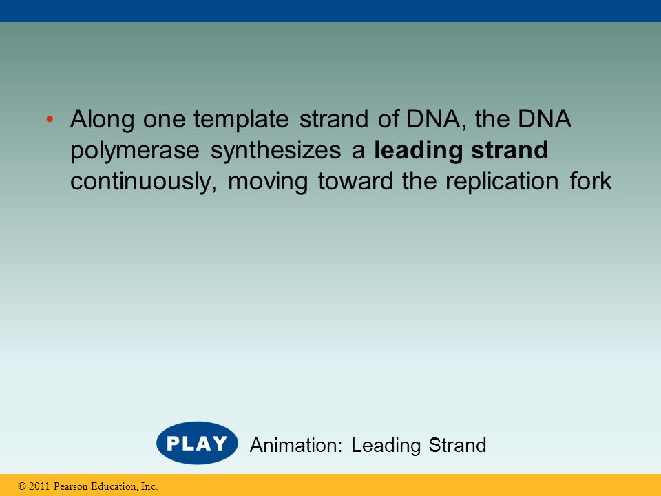 Along one template strand of DNA, the DNA polymerase synthesizes a leading strand continuously, moving toward the replication fork