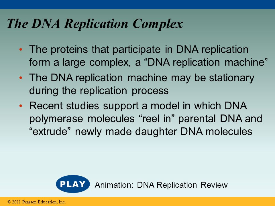 The DNA Replication Complex