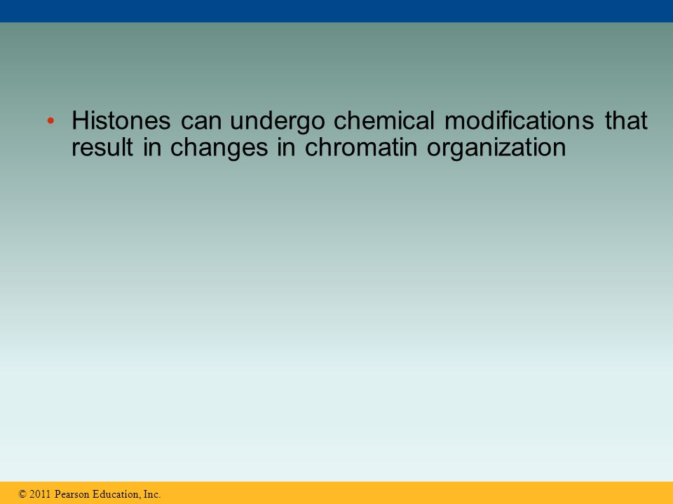Histones can undergo chemical modifications that result in changes in chromatin organization