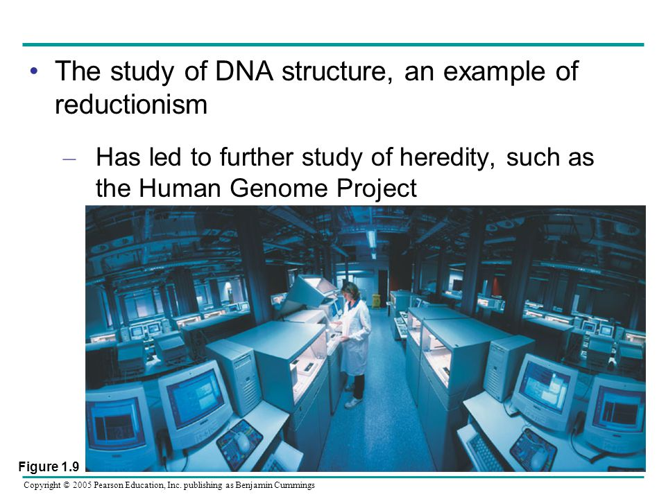 The study of DNA structure, an example of reductionism