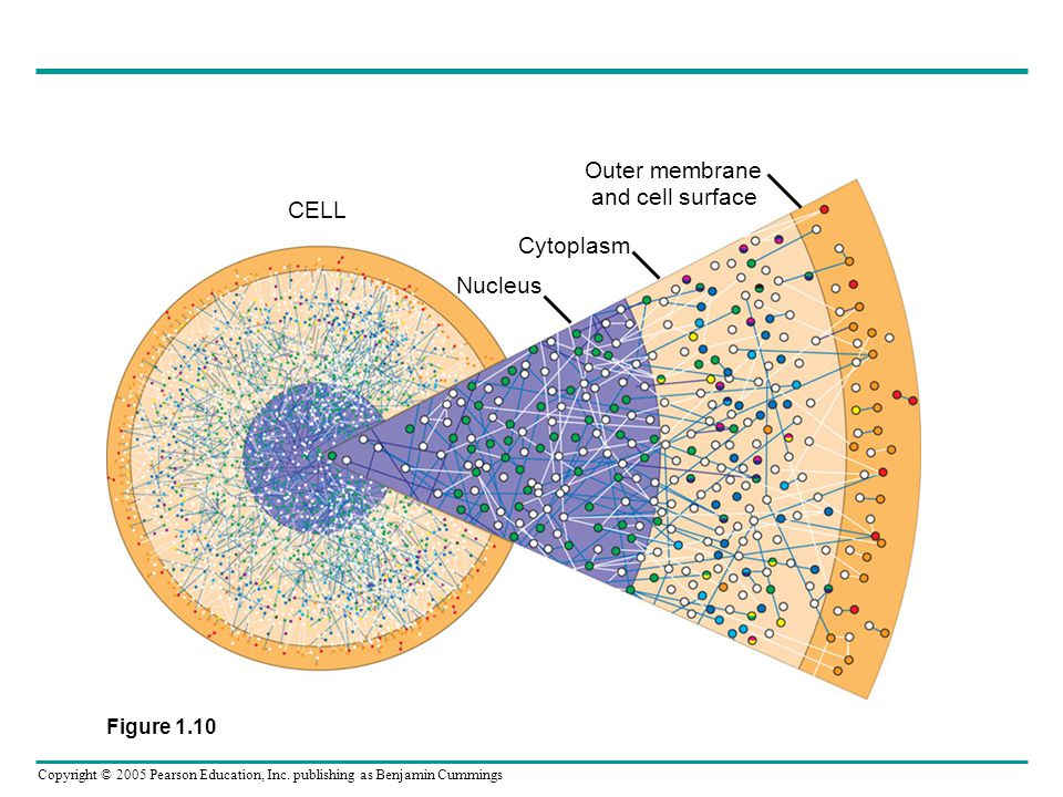 Outer membrane and cell surface