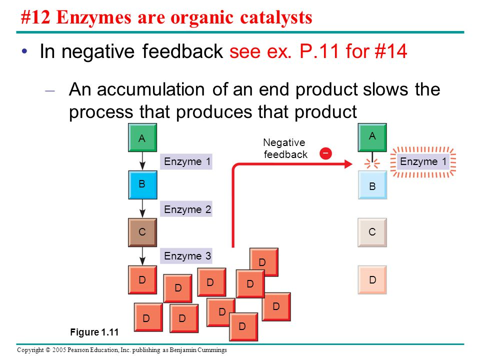 #12 Enzymes are organic catalysts