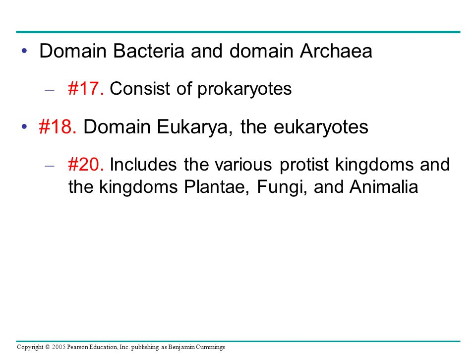 Domain Bacteria and domain Archaea