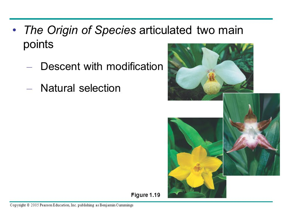 The Origin of Species articulated two main points
