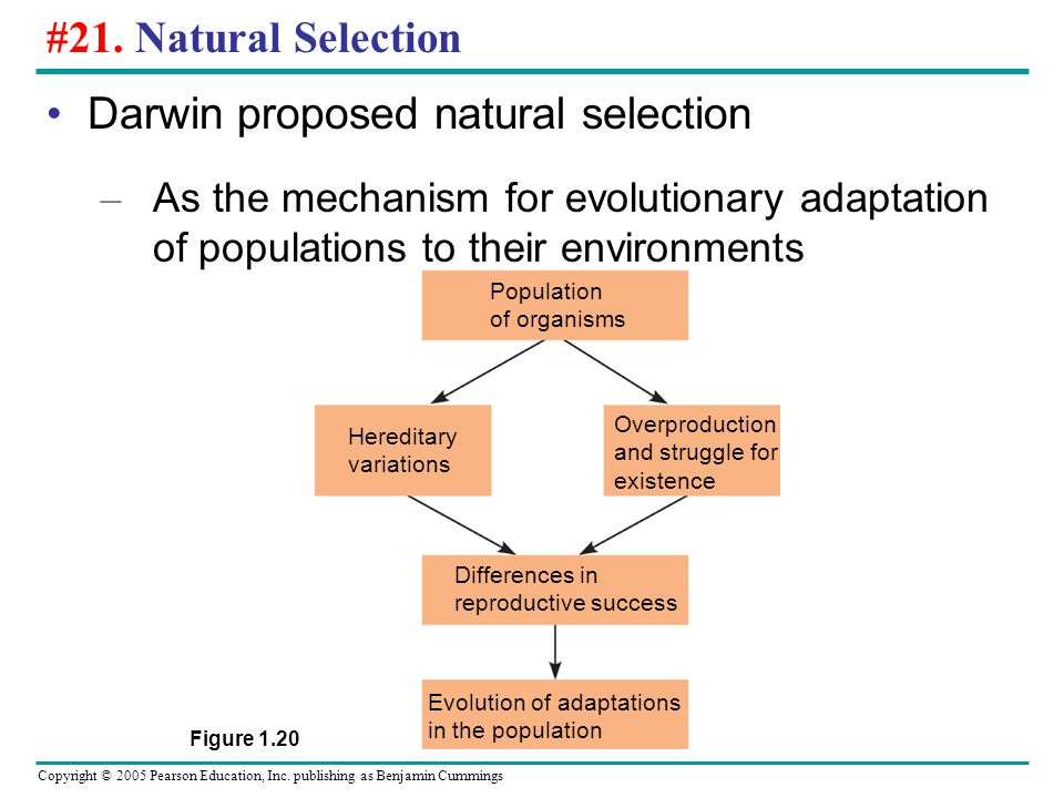 Darwin proposed natural selection