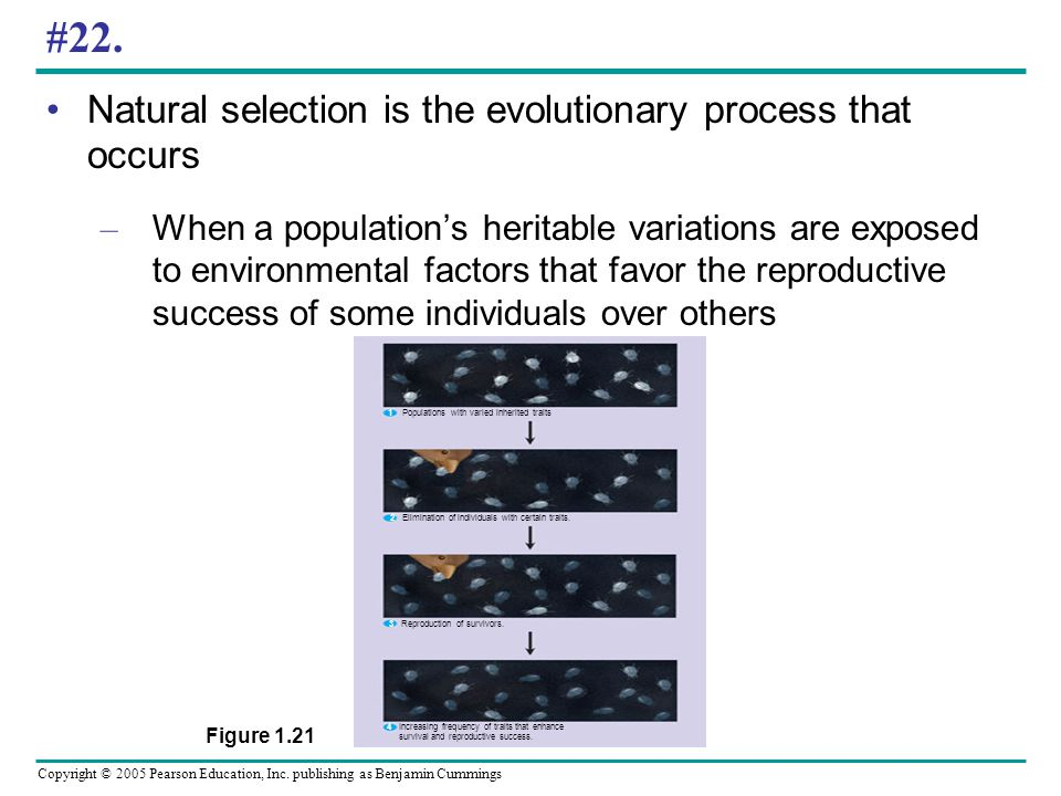 #22. Natural selection is the evolutionary process that occurs