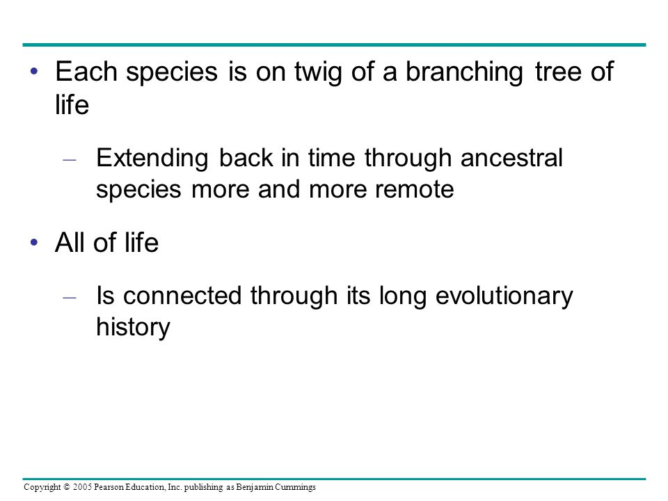 Each species is on twig of a branching tree of life