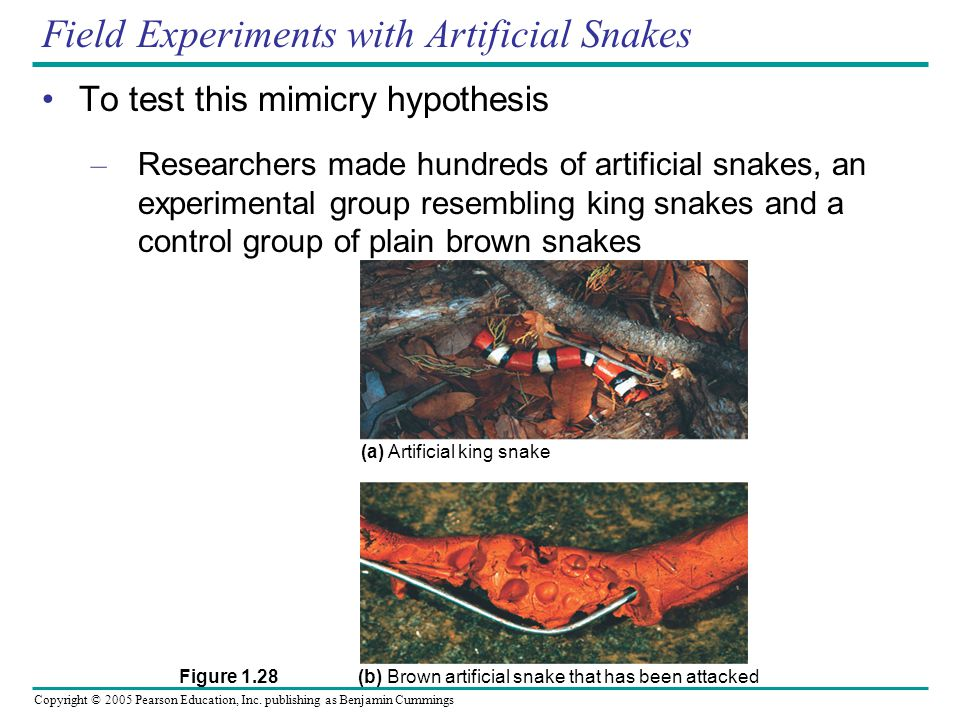 Field Experiments with Artificial Snakes