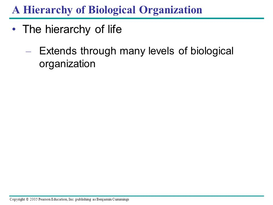 A Hierarchy of Biological Organization
