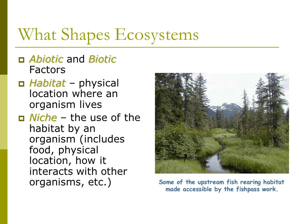 What Shapes Ecosystems