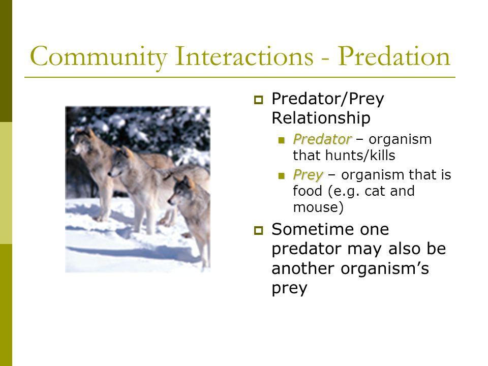 Community Interactions - Predation