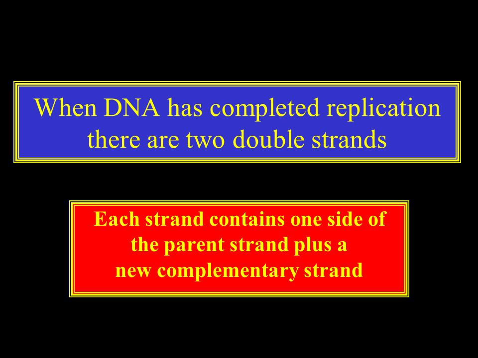 When DNA has completed replication there are two double strands