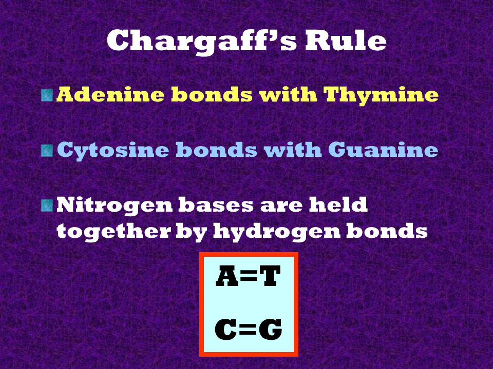 Chargaff's Rule A=T C=G Adenine bonds with Thymine