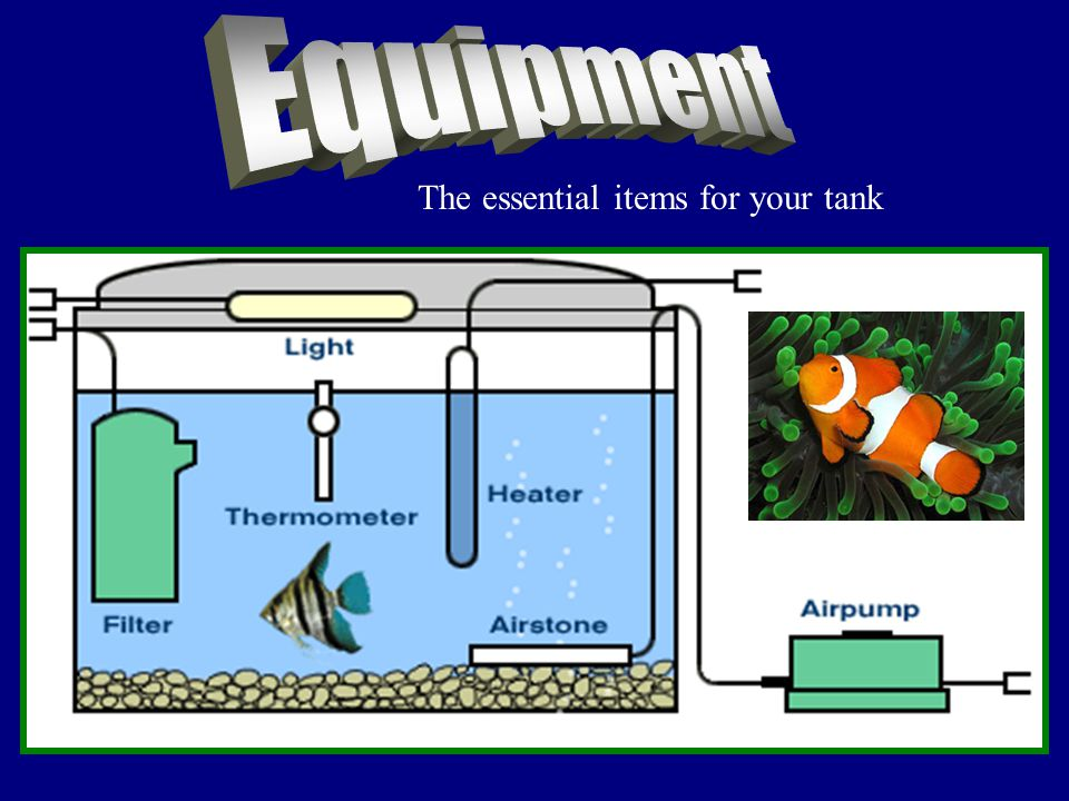 The essential items for your tank
