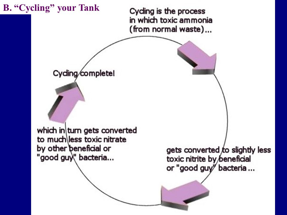 B. Cycling your Tank