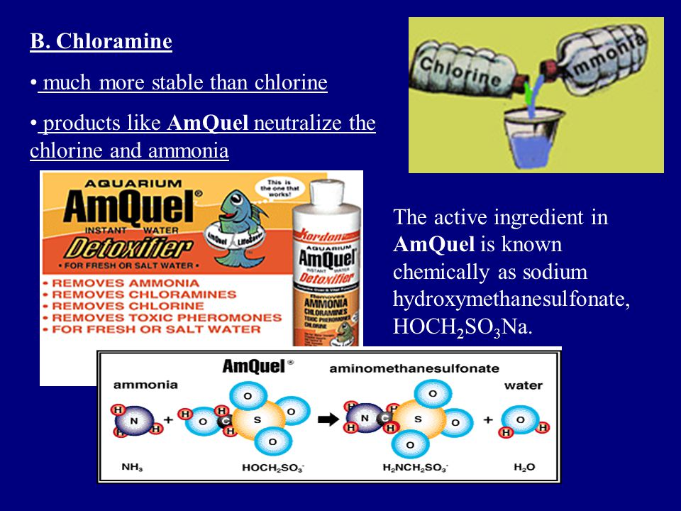 B. Chloramine much more stable than chlorine. products like AmQuel neutralize the chlorine and ammonia.