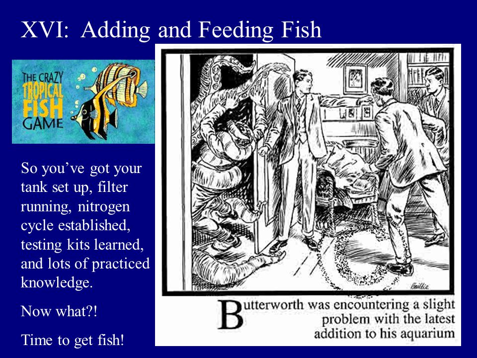 XVI: Adding and Feeding Fish
