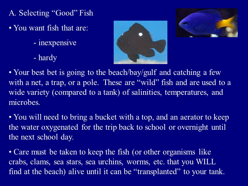 A. Selecting Good Fish