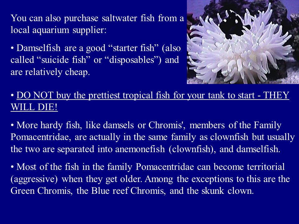 You can also purchase saltwater fish from a local aquarium supplier: