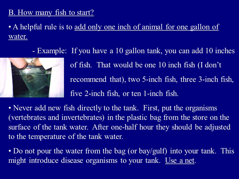 B. How many fish to start A helpful rule is to add only one inch of animal for one gallon of water.