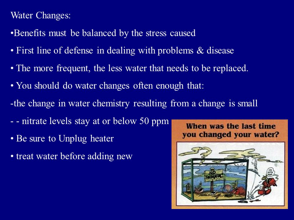 Water Changes: Benefits must be balanced by the stress caused. First line of defense in dealing with problems & disease.