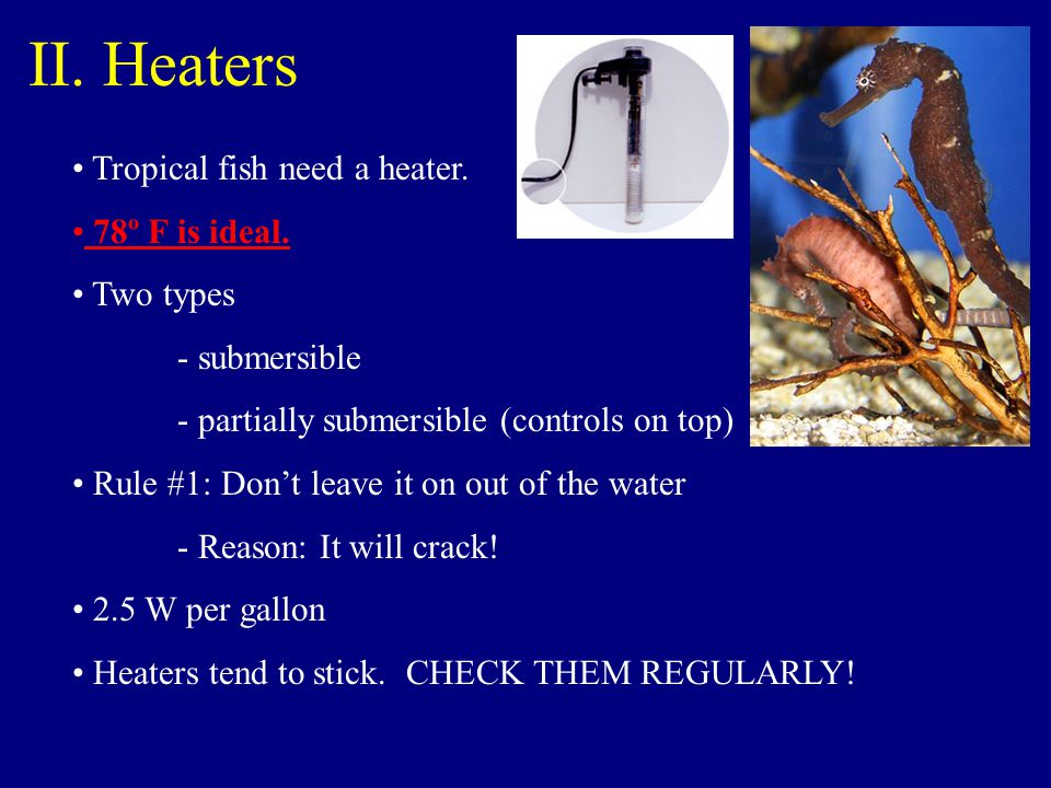 II. Heaters Tropical fish need a heater. 78º F is ideal. Two types