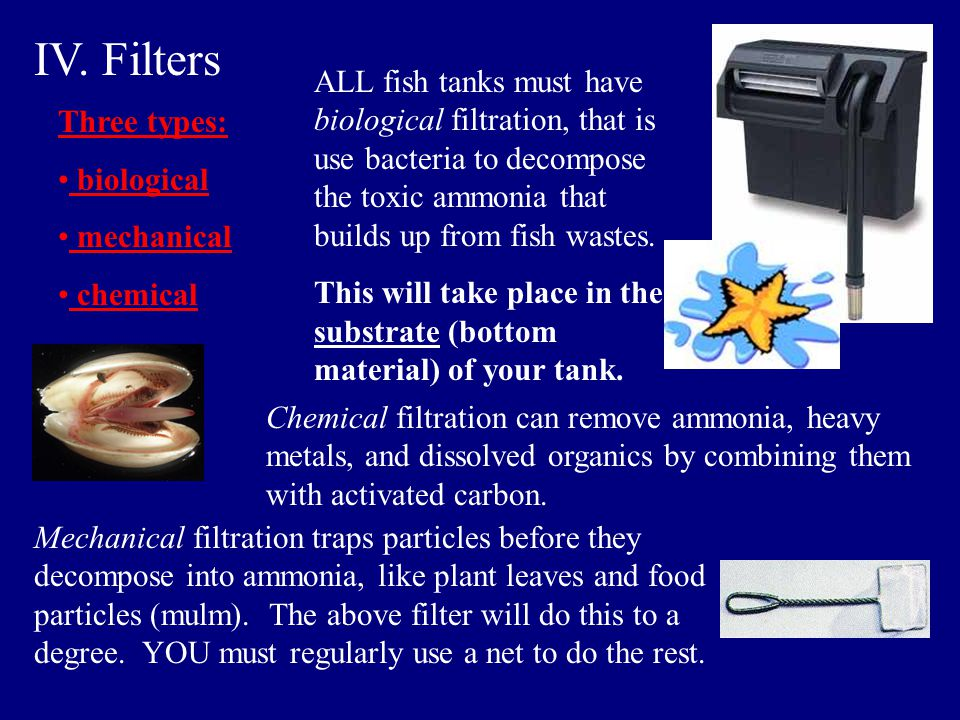 IV. Filters ALL fish tanks must have biological filtration, that is use bacteria to decompose the toxic ammonia that builds up from fish wastes.