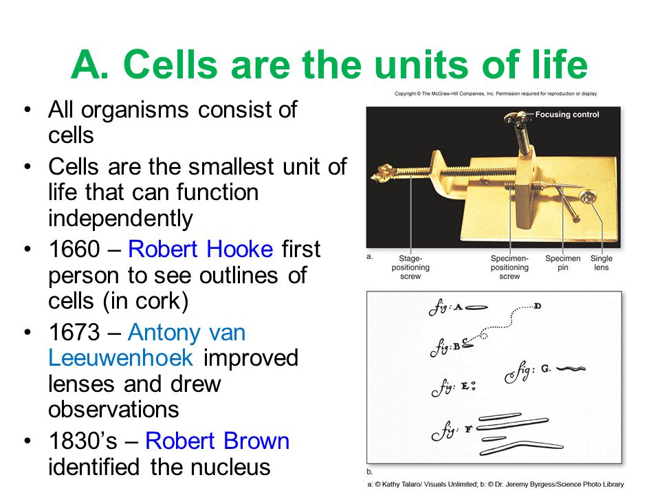 A. Cells are the units of life