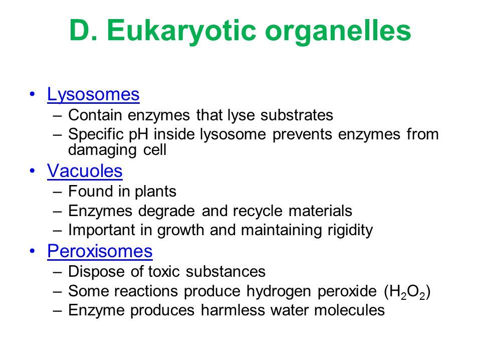 D. Eukaryotic organelles