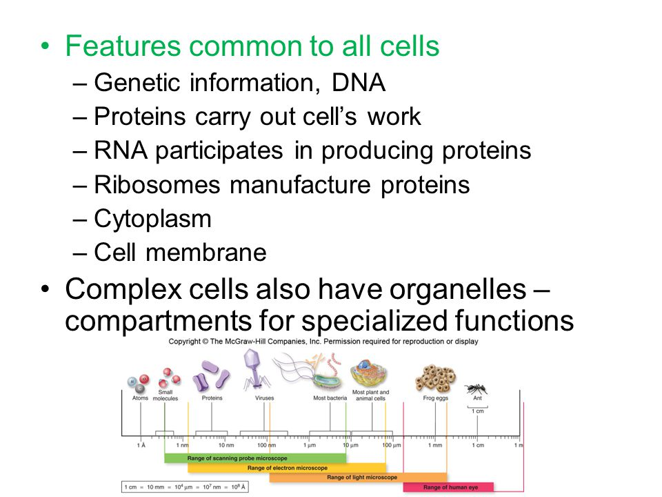 Features common to all cells