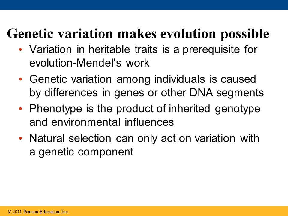 Genetic variation makes evolution possible